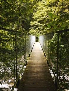 森の中の吊り橋の写真素材 [FYI00361311]
