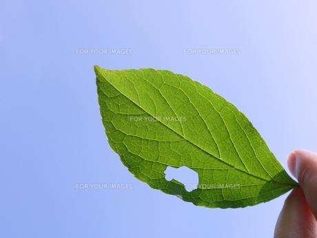 エコカー 葉と青空の素材 [FYI00361331]