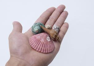 貝殻の写真素材 [FYI00361449]