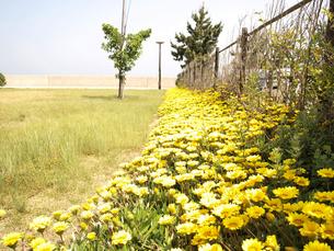 花の写真素材 [FYI00361465]