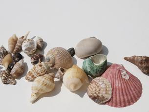 貝殻の写真素材 [FYI00361470]