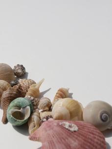 貝殻の写真素材 [FYI00361472]