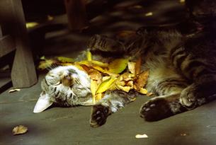 猫の写真素材 [FYI00361474]