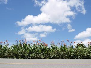 花の写真素材 [FYI00361481]