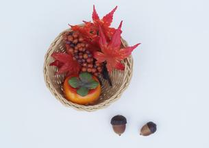 秋の写真素材 [FYI00361483]