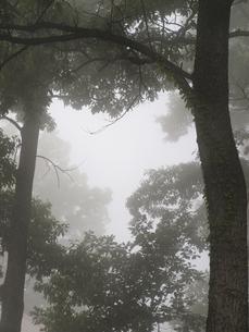 森林の写真素材 [FYI00361487]