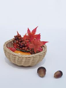 秋の写真素材 [FYI00361488]