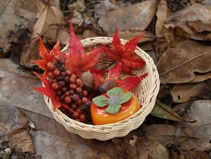 秋の写真素材 [FYI00361490]