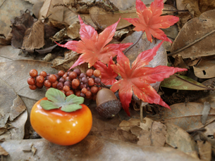 秋の写真素材 [FYI00361500]