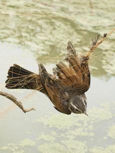 鳥の被害の写真素材 [FYI00361501]
