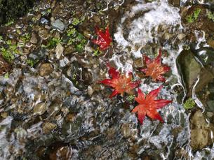 秋のせせらぎの写真素材 [FYI00361503]