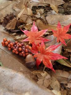 秋の写真素材 [FYI00361505]