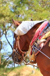 馬の素材 [FYI00361660]
