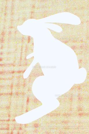 白ウサギの写真素材 [FYI00361663]