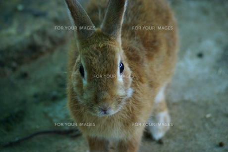 ウサギ年14の素材 [FYI00361769]