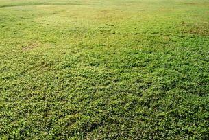 芝生の素材 [FYI00361798]