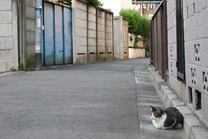 裏路地の猫の素材 [FYI00361809]