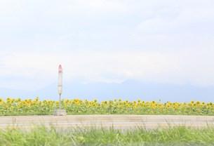 ひまわり畑とバス停の写真素材 [FYI00361964]