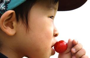 サクランボにキスする男の子の写真素材 [FYI00361986]