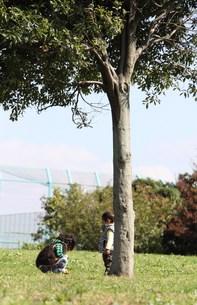 木の実を拾う兄弟の写真素材 [FYI00362071]
