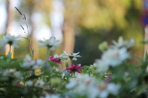 花の写真素材 [FYI00362146]