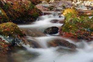 秋の小田深山の渓流の写真素材 [FYI00362260]