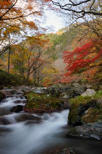 晩秋の小田深山の渓流と紅葉の写真素材 [FYI00362262]