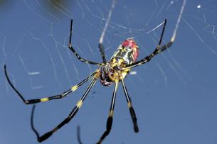 蜘蛛の写真素材 [FYI00362264]