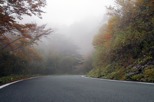 霧の瓶が森林道の写真素材 [FYI00362284]