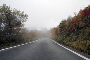 霧の瓶が森林道の写真素材 [FYI00362287]