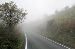 霧の瓶が森林道の写真素材 [FYI00362288]