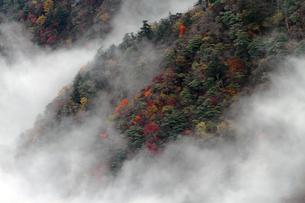 霧につつまれる西黒森の写真素材 [FYI00362300]