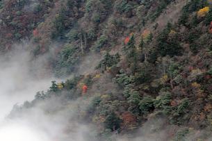 霧につつまれる西黒森の写真素材 [FYI00362309]