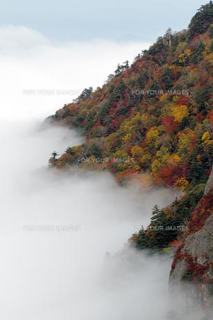 雲海と紅葉の瓶が森の素材 [FYI00362312]