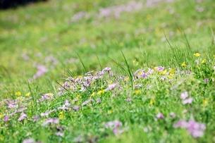 春の野原の写真素材 [FYI00363127]