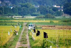 稲刈りのはじまった田んぼの素材 [FYI00363242]