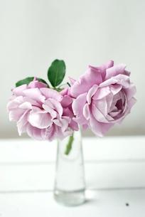 花瓶にいけたシャルル・ドゥ・ゴールの写真素材 [FYI00363570]