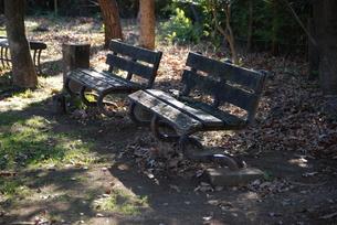 公園のベンチの写真素材 [FYI00363630]