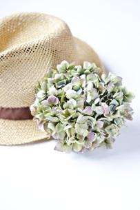 ドライ紫陽花と帽子の写真素材 [FYI00364122]