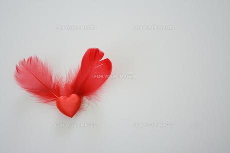 赤いハートと羽根の素材 [FYI00364285]