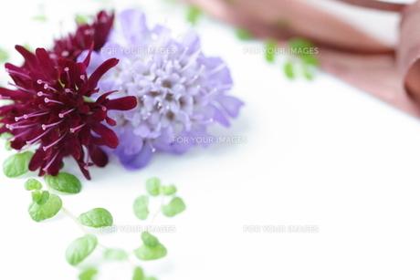 花の素材 [FYI00364416]