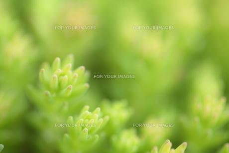 多肉植物の素材 [FYI00364435]