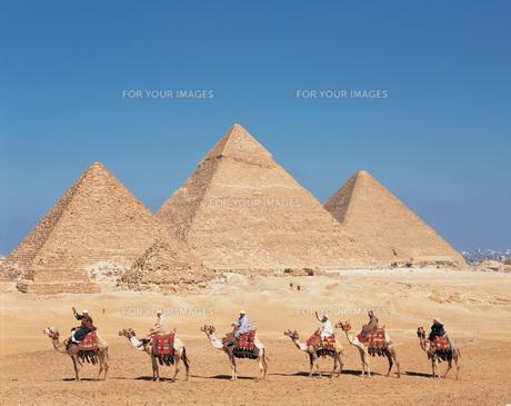 ギザのピラミッド前の駱駝の隊商の写真素材 [FYI00364598]