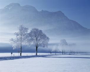 霧氷の並木道の写真素材 [FYI00364893]