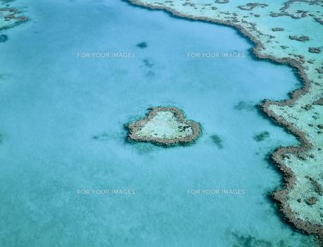ハート型珊瑚礁の写真素材 [FYI00364901]