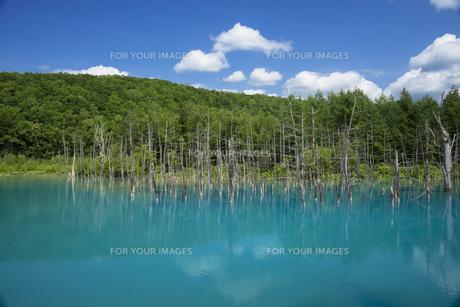 美瑛白金の青い池の写真素材 [FYI00365138]