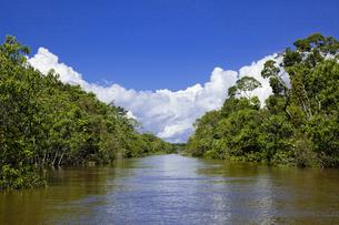 アマゾン川流域の写真素材 [FYI00365770]