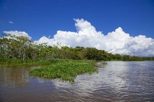 アマゾン川流域の写真素材 [FYI00365784]