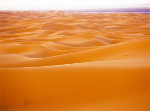 サハラ砂漠の素材 [FYI00365916]