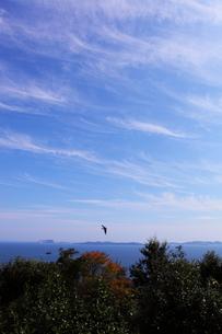 青空と海の写真素材 [FYI00367229]